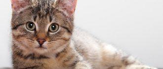 как назвать кота мальчика