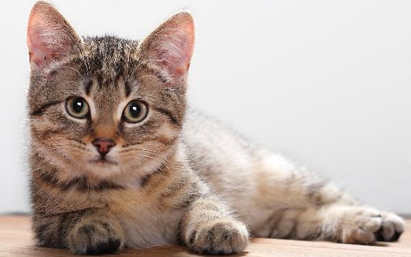 имя для кота мальчика