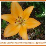 kakoi-cvetok-simvol-francii-0293