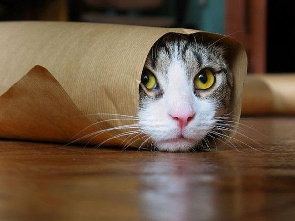 в каком возрасте кастрируют котов